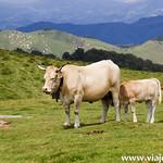 11 Viajefilos en Navarra, Orbaitzeta 009