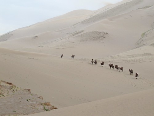 sand dunes august mongolia camel 2015