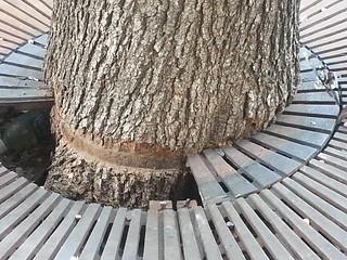 I hate tree grates
