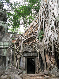 Tree roots of Ta Prohm, Siem Reap, Cambodia