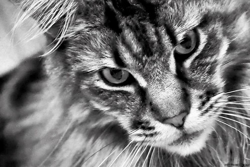 The cat's eyes | by Nemodus photos