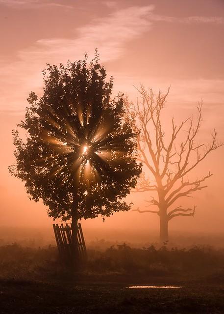 November Dawn in Bushy Park