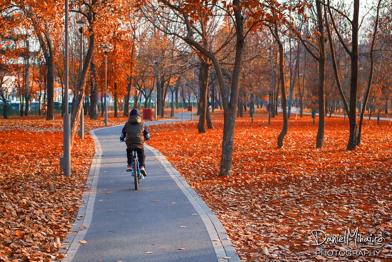 Autumn path by Daniel Mihai
