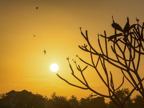 sunset urban bird landscape birdsinflight caribbean trinidadandtobago trincity nikkor55200vrafsdxf456 nikond5200