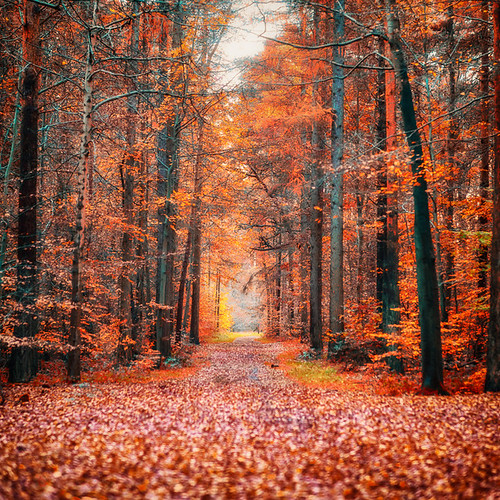 autumn trees tree fall nature leaves rural forest woods path branches brandon footpath thetford countrypark