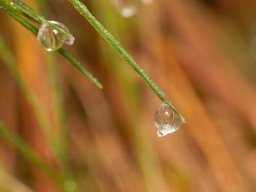 Dew | by ComputerHotline
