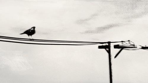 Bird On The Wire | by miumiumiu aka miu x 3