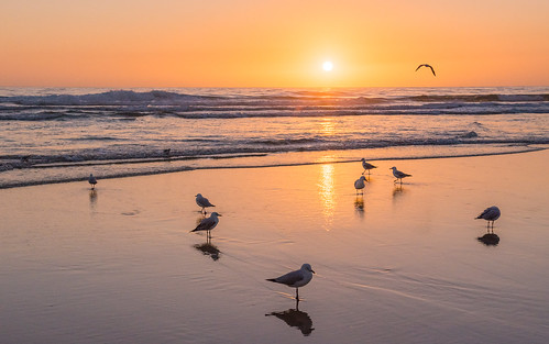 seagull birds surfers paradise sunrise gold coast queensland australia beach ocean surf sand sun water