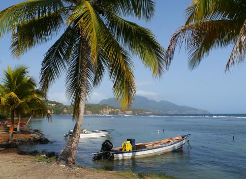 sea coast boat palmtree caribbean dominica calibishie