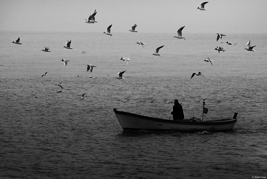 376 - Master of the Gulls