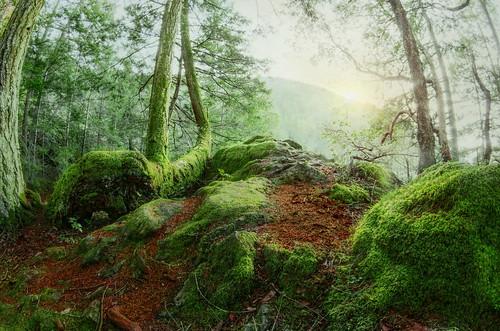 park trees light canada rainforest bc gimp victoria rawtherapee