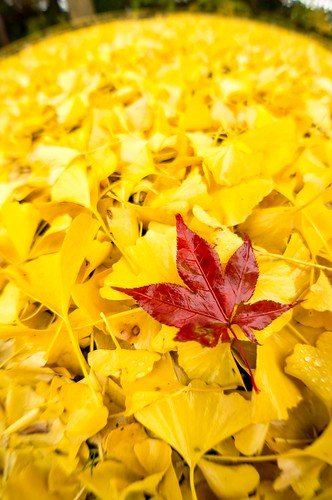 「黄に混じれば赤は映え」 | by hiroching