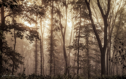 wood trees england mist misty woodland golden unitedkingdom sony gb arboreal a99 sonyalpha andyhough southoxfordshiredistrict slta99v littlewittenhamwood andyhoughphotography