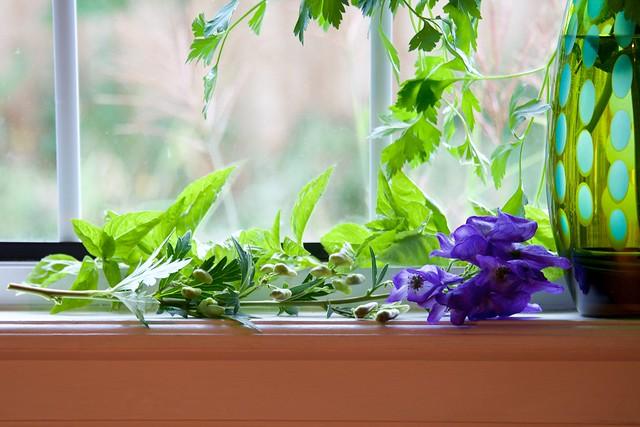 Monkshood with Herbs
