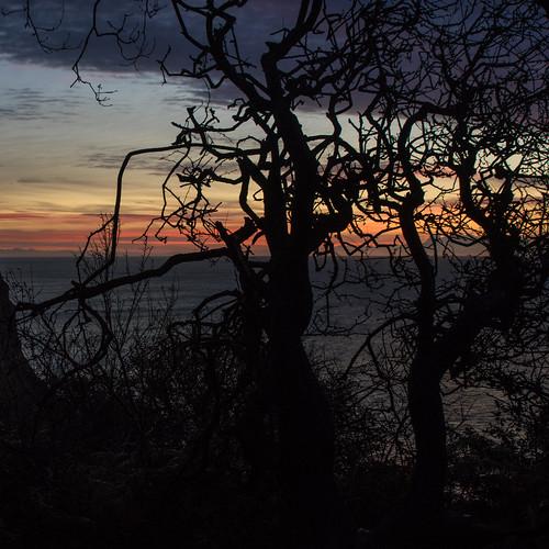 ecclesbourneglen oaktree sunrise sunup daybreak dawn sea