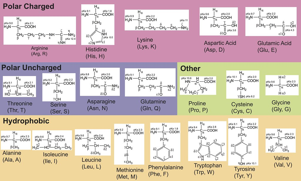 Cool Amino Acid Table Amino Acid Table 10 2 2015 Made In Adobe Download Free Architecture Designs Embacsunscenecom