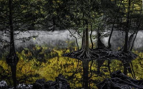 redbudisle fog foggy dawn colors colorful blackwhite ladybirdlake water lake olympus landscape
