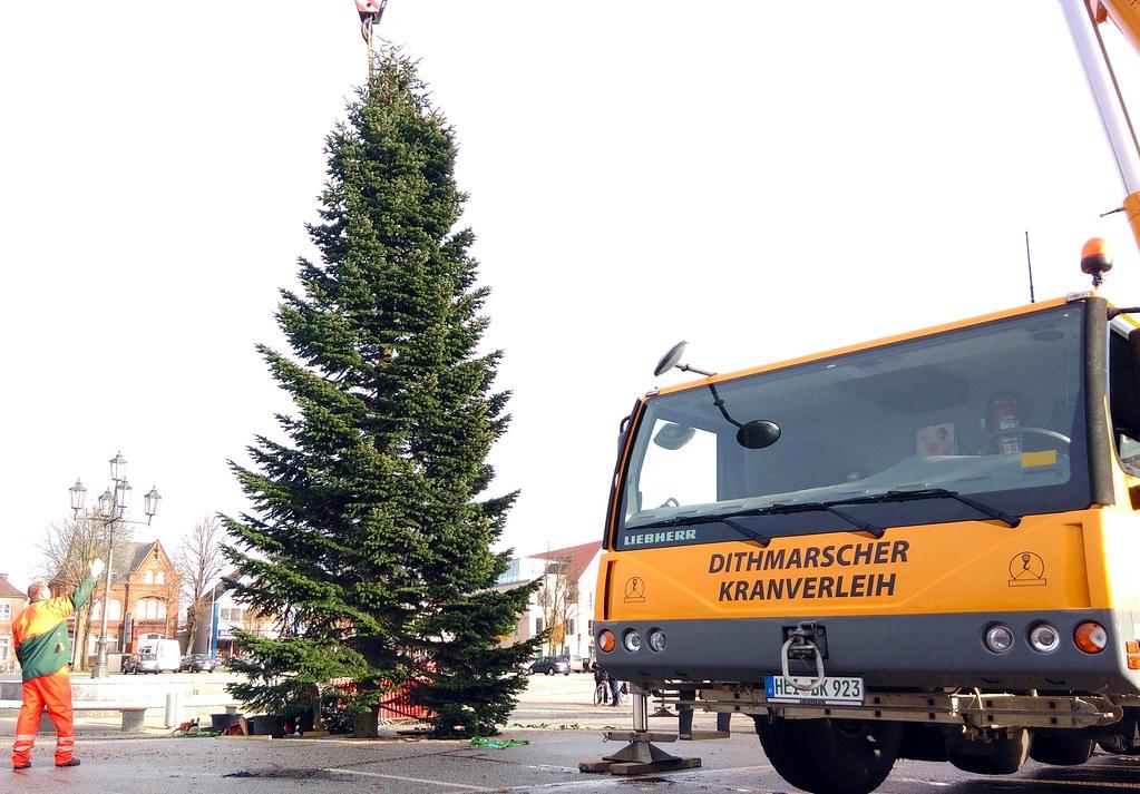 Der Baum steht...