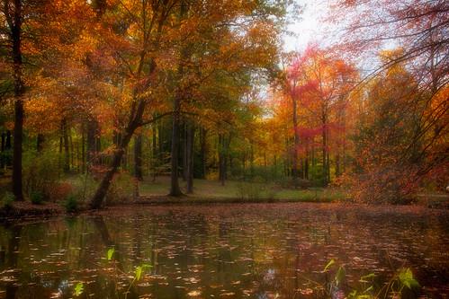autumn trees ohio color fall gardens arboretum pro nik sanctuary holden cultivated holdenarboretum nikcolorefexpro efex arboreta cultivatedgardens