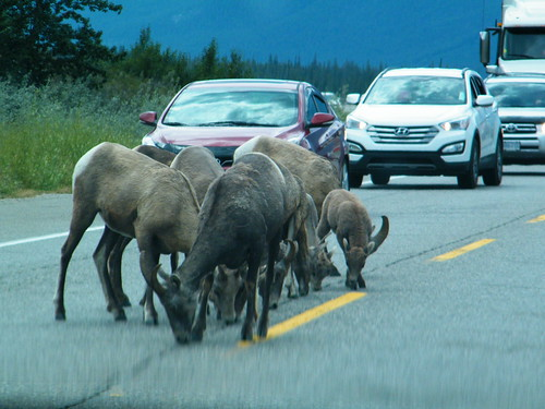 Traffic Jam Culprits in Jasper | by jensrealia