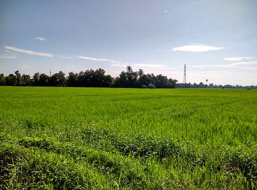 field thailand feld chiangmai ricefield reisfeld paddyfield 田 bearbeited