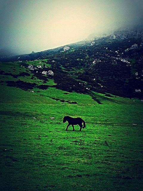 Lone horse Asturias