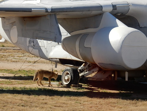 Pima Air-Space museum - Boneyard - coyote - 2