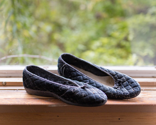 Fetch my slippers | by ZensLens
