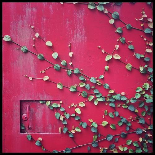 On Red. #Taiwan #Nantou #neighborhood #red #台灣 #南投 #中興新村 | by ToddinNantou