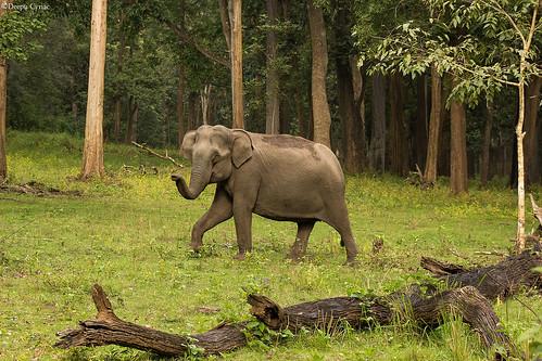 travel elephant nature animals wildlife karnataka westernghats nagarhole asiaticelephant indianforest