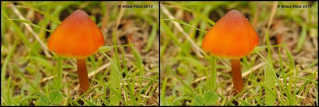 Mushroom -3d cross-view