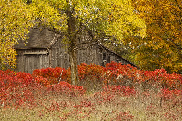 Old Abandoned Barn in Autumn