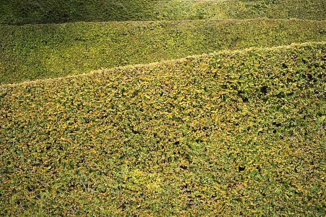 Green levels. Veneto 2016.