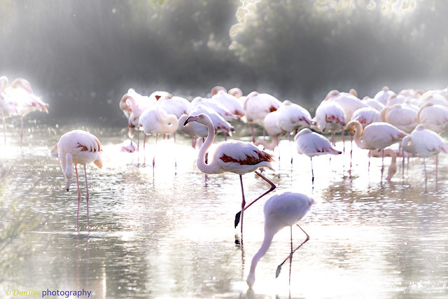 Flamingos on the sunlight