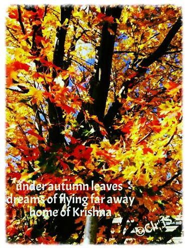 Oct 14 2015 trees