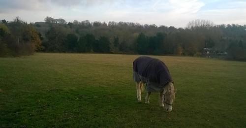 Horse near Lullingstone