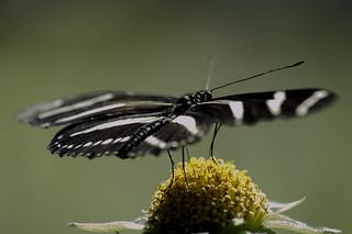 Macro-butterfly2-1