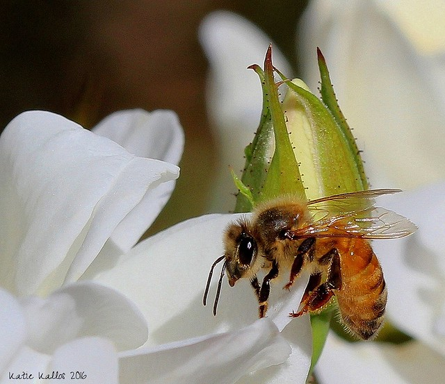 Oct. 15 16 (209)  Bee Macro