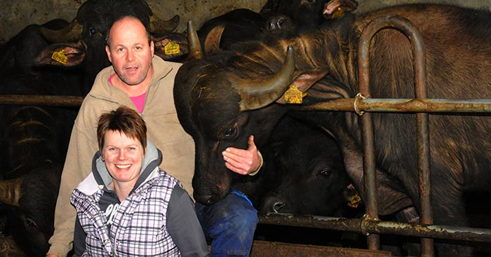 Oldemarkt Waterbuffelfarm