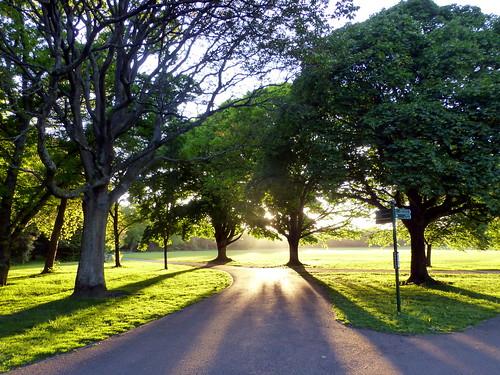 Bute Park | by orangebrompton