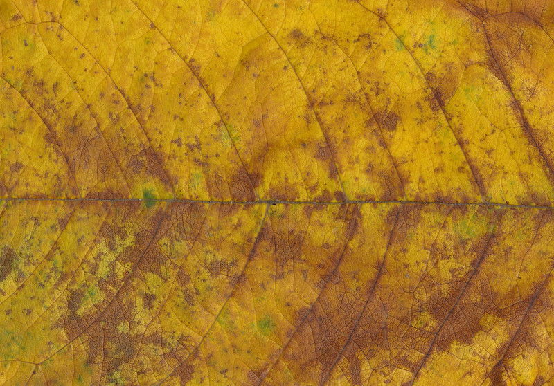 CreativeCommons - Autumn leaves - 2015 Series 1 - 08 by #TexturePalace