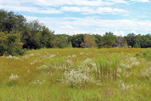 field woods grass brush trees flowers wildflowers citrussprings florida