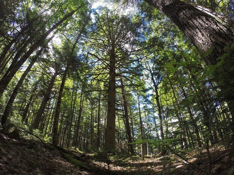 Hemlocks & Hardwoods Hiking trail