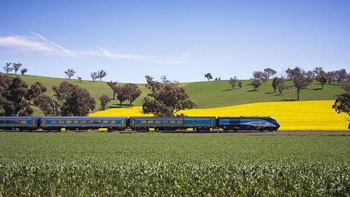 blue sky sun sunlight green grass yellow train daylight country fields wimbledon xpt jindalee xpclass xp2017 xp2012