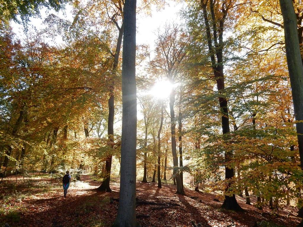 Autumn in the woods 1 Little Kimble to Saunderton