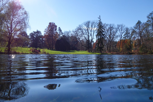 autumn fall water gardens pond estate pennsylvania ripples dupont longwood kennettsquare reflectionstrees