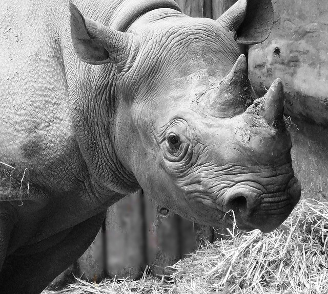 ~ chester zoo ~