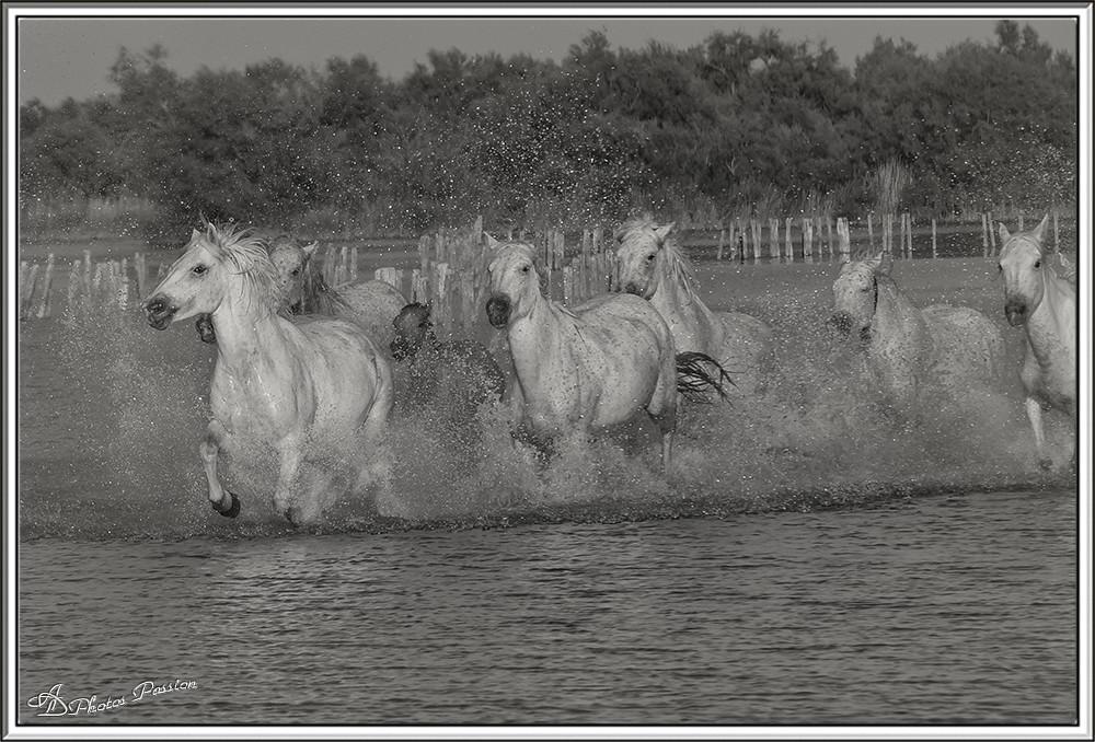 Galop dans le Marais (5)