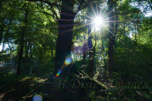 uk trees nature weather wales sunrise landscape woodlands sunglare northwales clwyd
