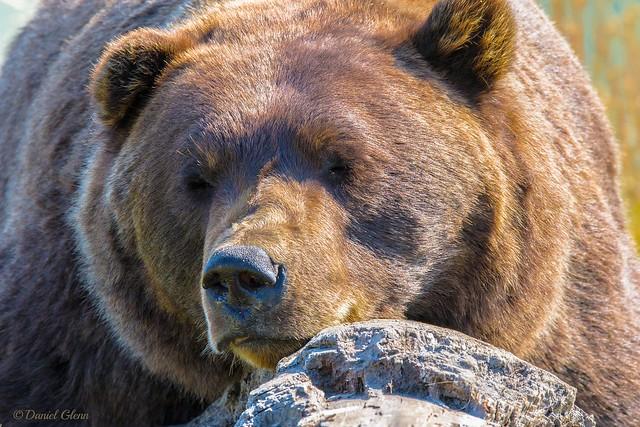 Leave sleeping bears lie...